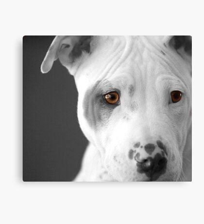 Freckles the Pit Canvas Print