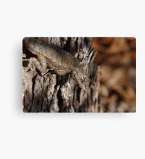 Fence Lizard Canvas Print
