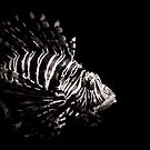 Lionfish by NFirebaugh