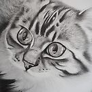 Pixie the kitten by mbillustrations