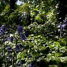 Spanish Bluebells in a Secret Garden by Ruski