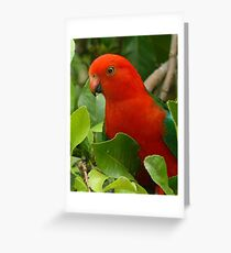 Australian King Parrot.....Up Close and Personal  Greeting Card