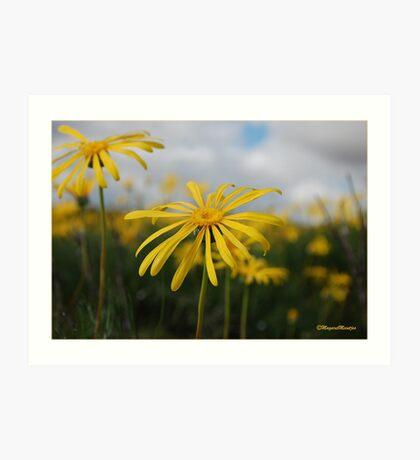 SPRING PLEASURE - Al die veld is vrolik.... Art Print