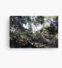 Australian Bush Canvas Print