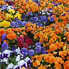 Pancy Flowers happines!!! by Tatyana Binovskaya