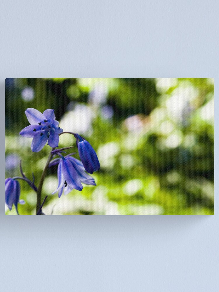 Alternate view of Spanish Bluebell Canvas Print