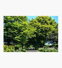 Beautiful Trees.........Somerset UK Photographic Print