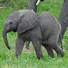 Baby African Elephant by quentinjlang