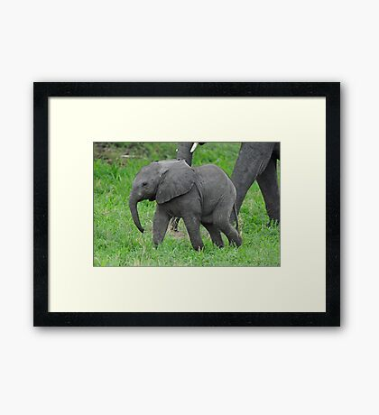 Baby African Elephant Framed Print