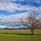Rural Views in the Northern Midlands by Peter Daalder