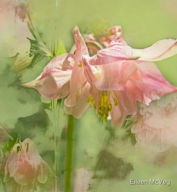 Flower Fairies by Eileen McVey
