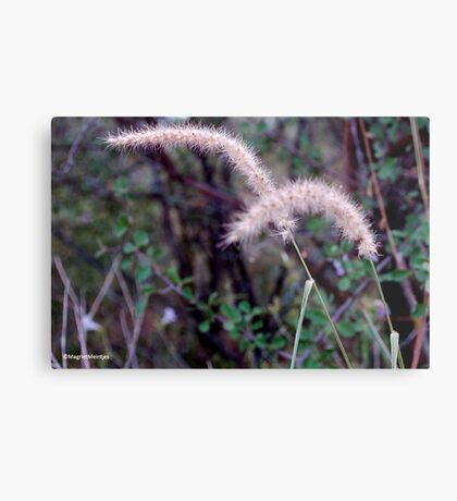 BEAUTY IN THE EYE OF THE BEHOLDER Metal Print