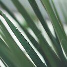 Raindrops on green by KeyLargoStudios