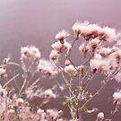 Fairy Cotton by Shawna Rowe