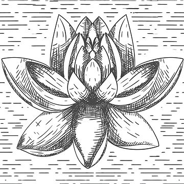Lotus Flower by criyoj