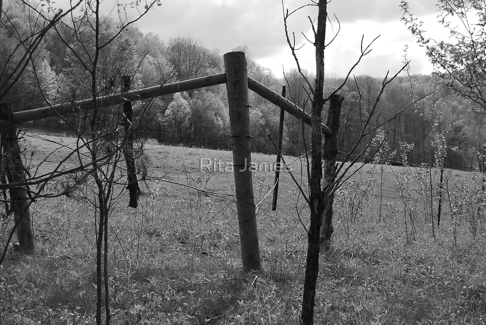 Fence by Rita James