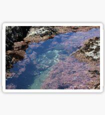 Tidal Pools Sticker