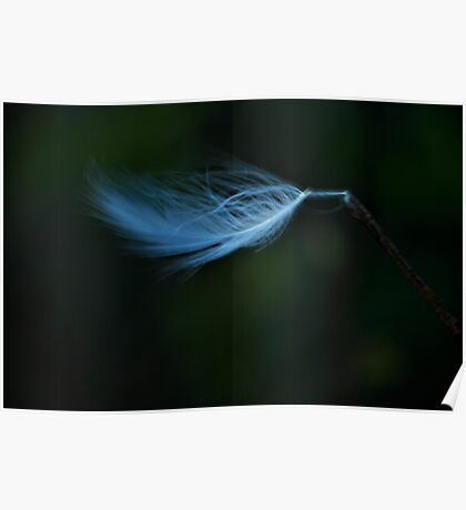 Blue Feather in Wind Poster