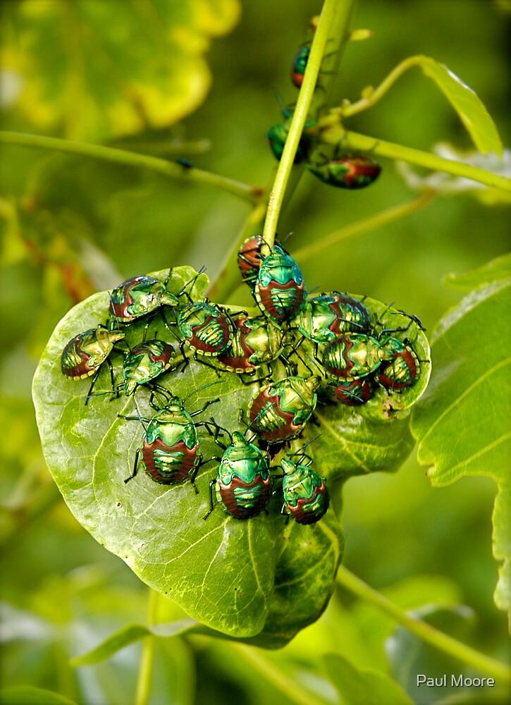 Beetle mania! by Paul Moore