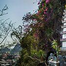 Vietnam, Landscape 1 by AndrewStadnyk