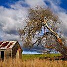 Rustic Rural Tasmania by Peter Daalder