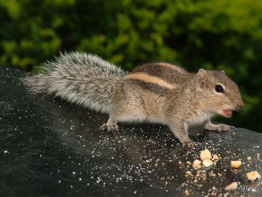 Squirrel by AravindTeki
