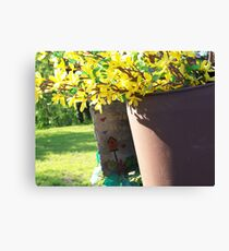 bird house Canvas Print