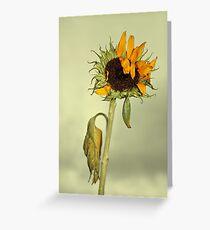 Fading glory Greeting Card