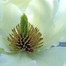 Goldfinch Magnolia by mooksool