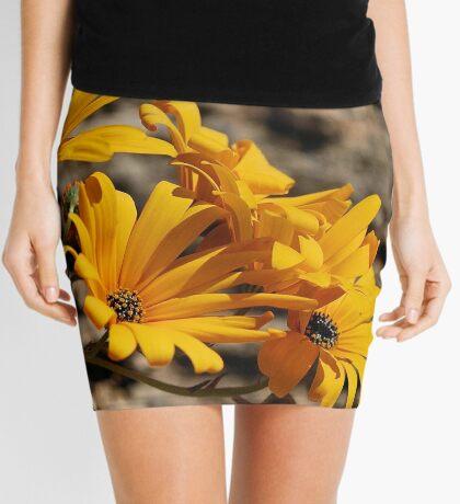 Arctotis cuprea – ASTERACEAE – Gousblom Mini Skirt