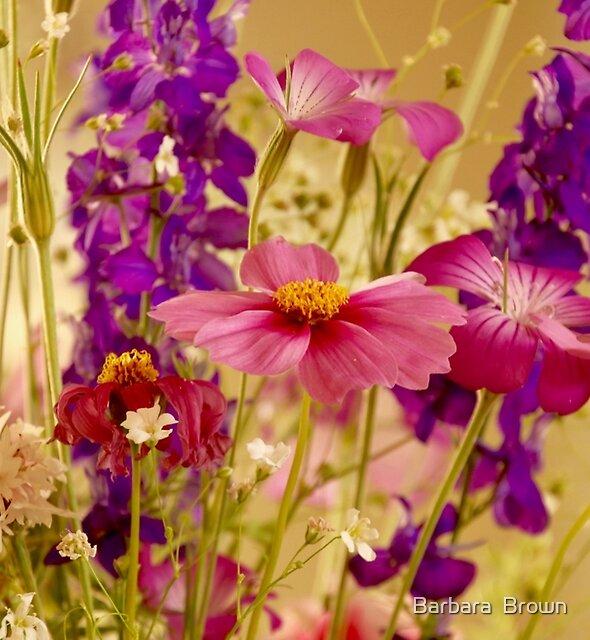 Spring by Barbara  Brown