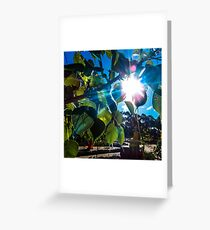 Bodhi Leaves Greeting Card