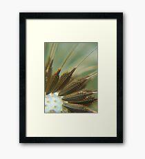 Dandi Seeds Framed Print