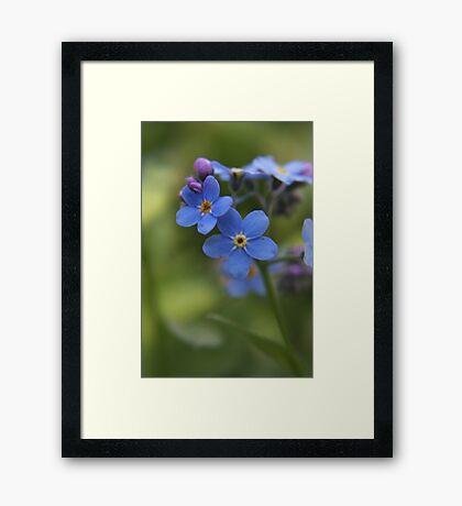 Blue wild flowers Framed Print
