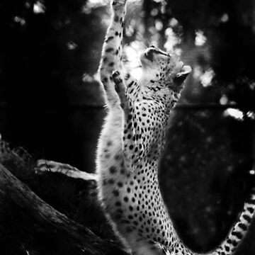Cheetah Reach by SeeThinkCreate