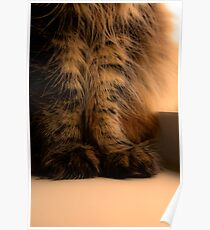 Furry Feet Poster