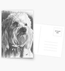 Schnoodle Postcards