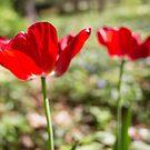 Red Flowers by cyrenekrey