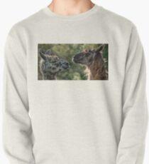 Sweet Llamas Pullover