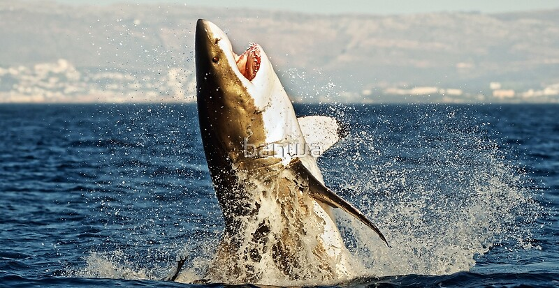 Realistic Great White Shark Jumping Out Of The Ocean   Art Print