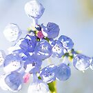 May Flowers by cyrenekrey