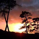 X Trees in Sunset by ienemien