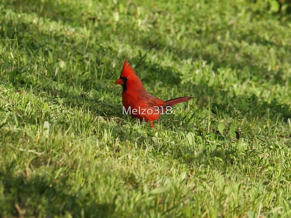 Cardinal by Melzo318