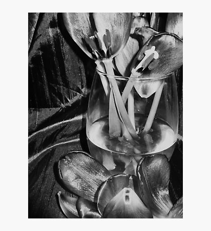 Tulips and petals,,,,,in bw Photographic Print