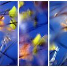 Beyond Blue - Triptych by Kitsmumma