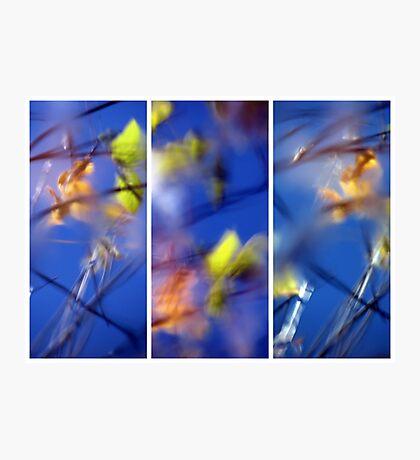 Beyond Blue - Triptych Photographic Print