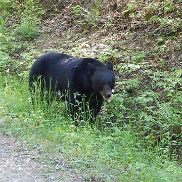 Black Bear  by LeeAnnaRose96