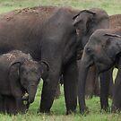 Roaming in a herd by Chamika Amarasiri