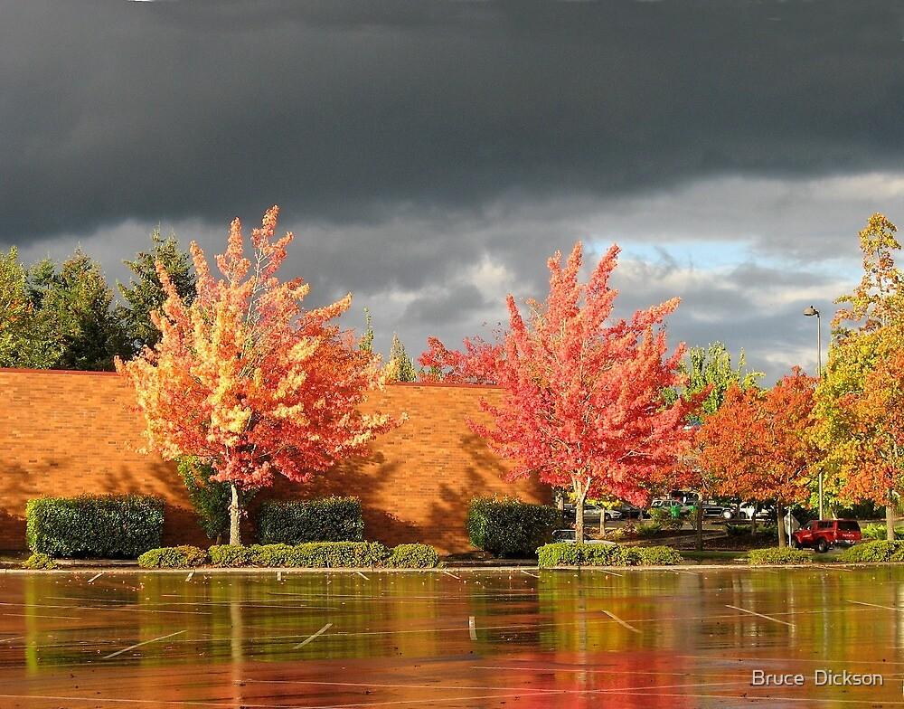 rain fall by Bruce  Dickson