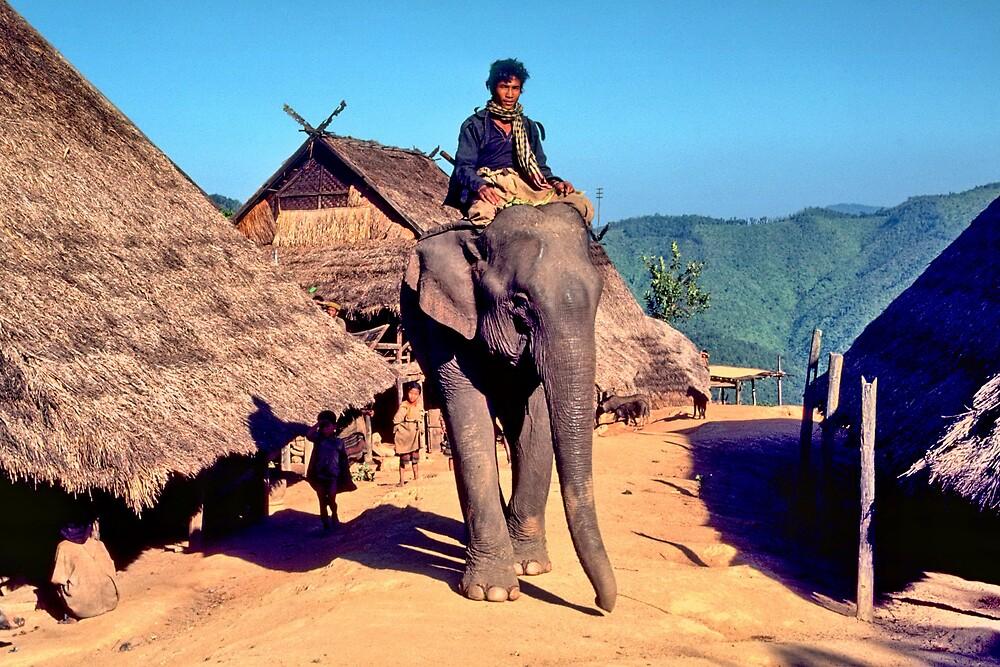 Village elephant by John Spies